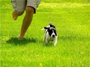 nohy, které běží a pes, který běží